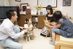 ボランティア一時預かり宅に保護犬を届ける