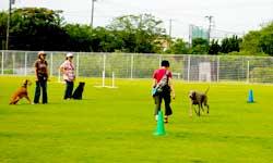 呼び出しの訓練をしている犬と飼い主、それを見ているスクールの生徒さんたち。