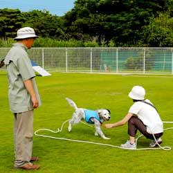 訓練中の飼い主と見守る山本さん。