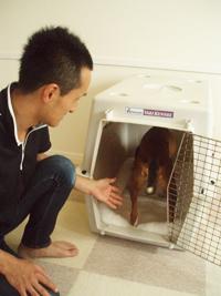犬がハウスに入ってもまだ扉を閉めない