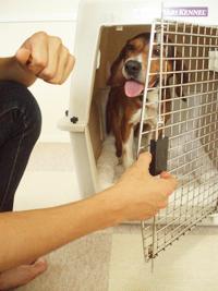 愛犬が飛び出さないことを確認し、ゆっくり扉をしめる