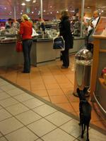 ショップにも犬をつなぐ場所がある。