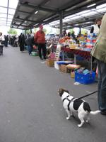 マーケットで見かけた犬2