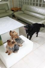 3匹の犬とリビング