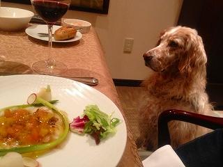 レストランで落ち着いて過ごすペット