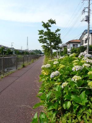 恩田川沿いのサイクリングロード