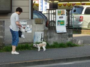 町田街道沿いを愛犬と歩く女性