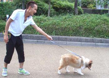 散歩トレーニング(引っ張っている犬)
