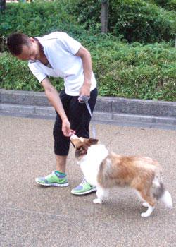 散歩トレーニング8-2